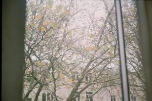 klik 0008 bomen